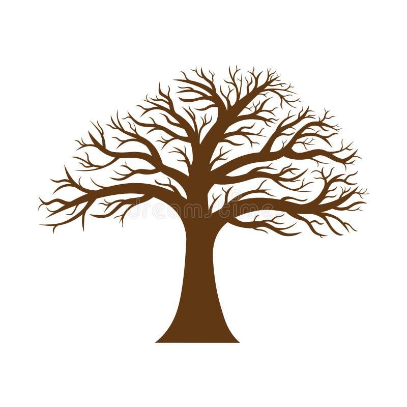 Silhueta da árvore desencapada sem as folhas no inverno fotografia de stock royalty free