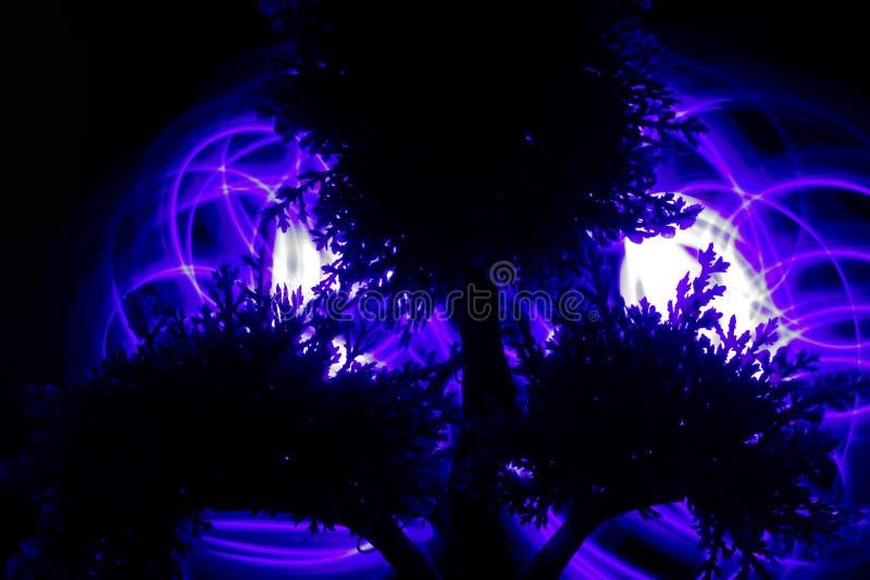 Silhueta da árvore inoperante imagens de stock
