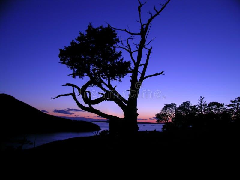 Silhueta da árvore no crepúsculo fotografia de stock