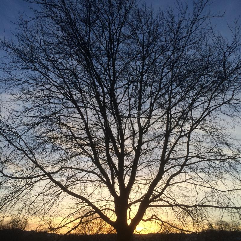 Silhueta da árvore no por do sol no azul ao fundo alaranjado imagens de stock