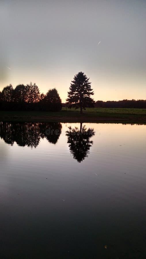 Download Silhueta Da árvore Que Reflete Na Lagoa Imagem de Stock - Imagem de árvore, linha: 80101121