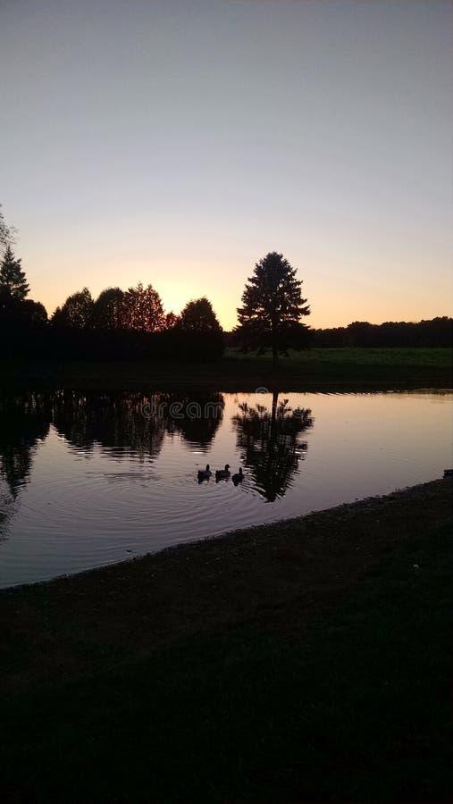 Download Silhueta Da árvore Que Reflete Na Lagoa Imagem de Stock - Imagem de sunset, horizonte: 80102159