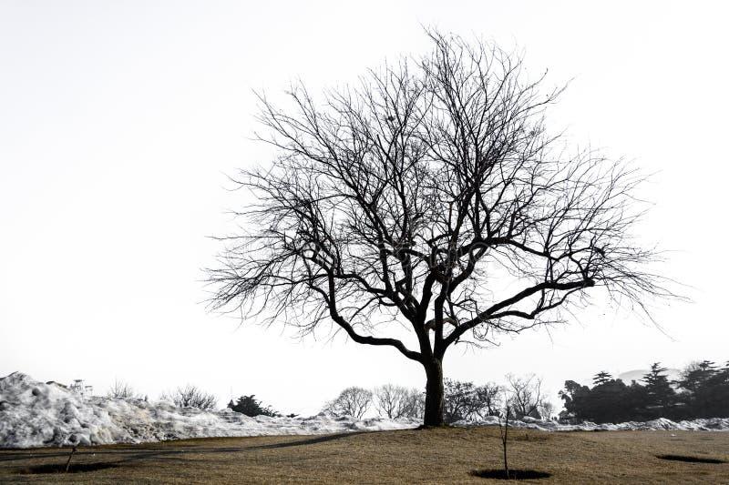 Silhueta da árvore só fotos de stock royalty free