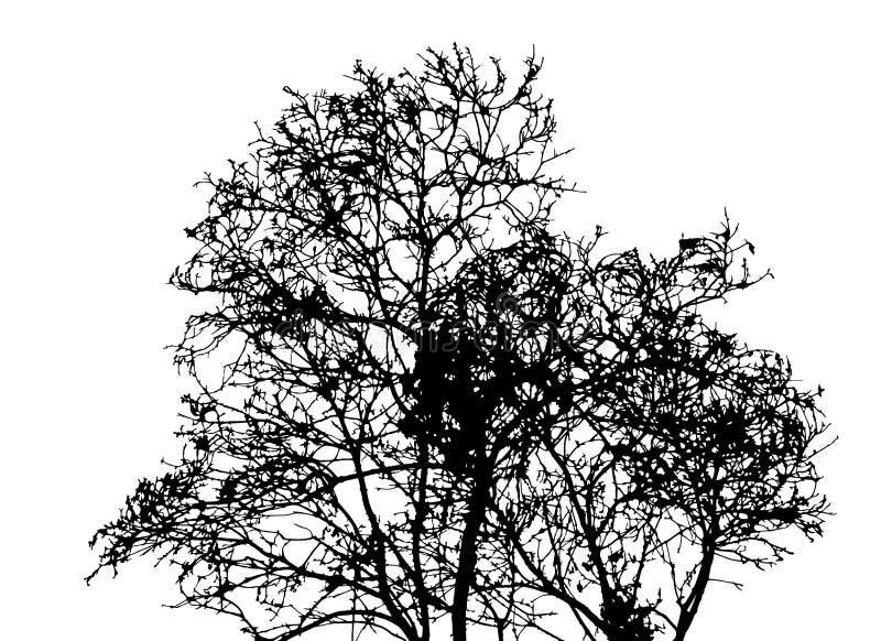 Silhueta da árvore sem folhas isoladas no fundo branco v ilustração royalty free