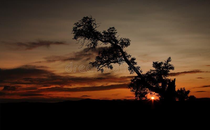 Silhueta da árvore velha durante o por do sol africano imagens de stock royalty free