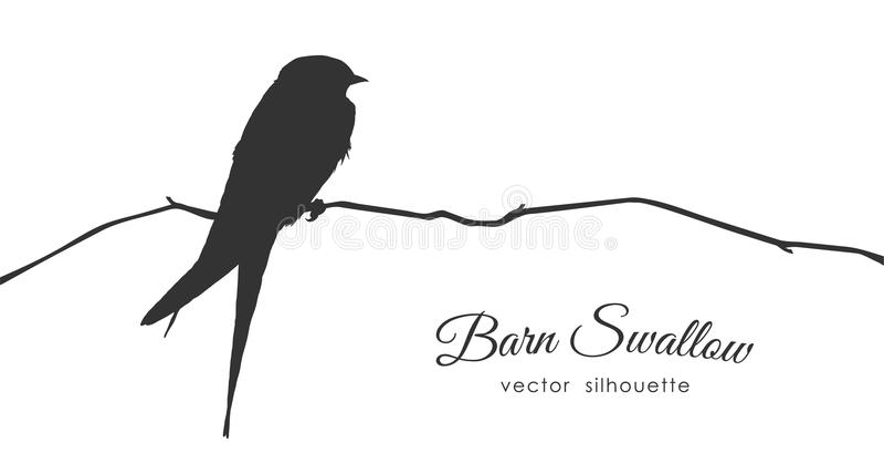 Silhueta da andorinha de celeiro que senta-se em um ramo seco ilustração do vetor