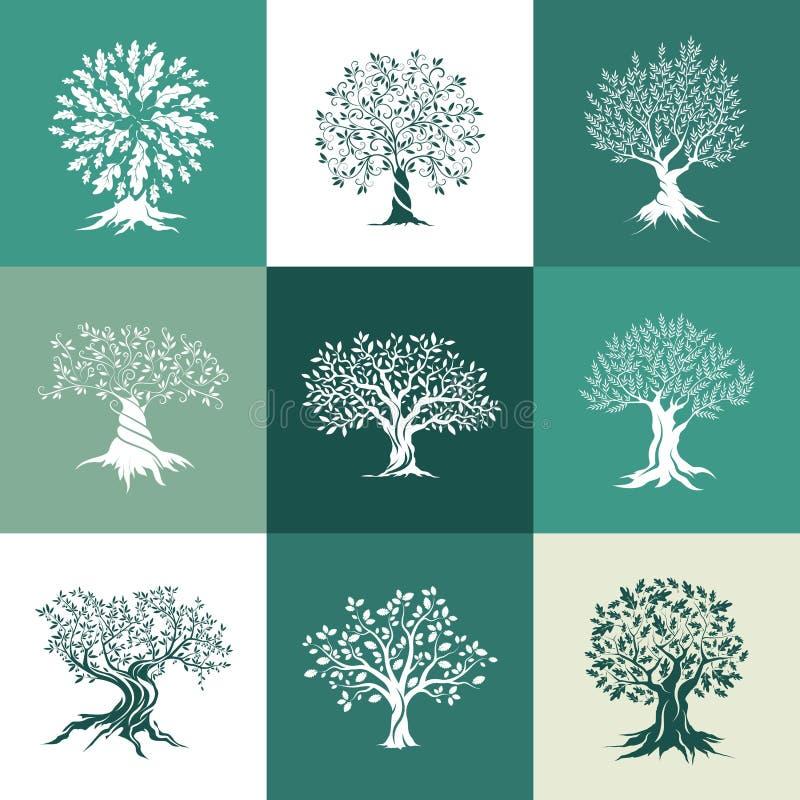 Silhueta da azeitona e dos carvalhos isolada no fundo da cor ilustração royalty free