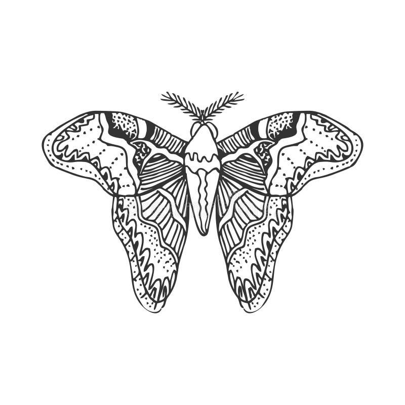 Silhueta da borboleta do vetor da tração da mão Isolado no elemento branco do vetor do projeto ilustração do vetor
