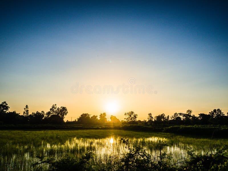 Silhueta da exploração agrícola da agricultura do arroz imagens de stock