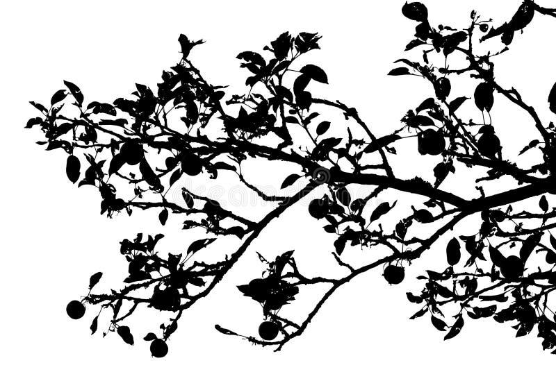 Silhueta da filial de árvore de Apple ilustração royalty free