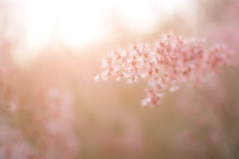 A silhueta da flor da grama com fundo do por do sol, cor nublou-se o estilo imagens de stock royalty free