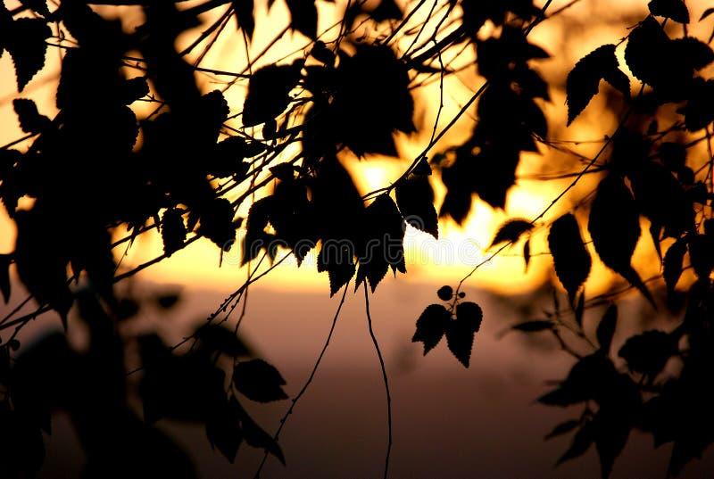 Silhueta da folha no luminoso imagem de stock royalty free