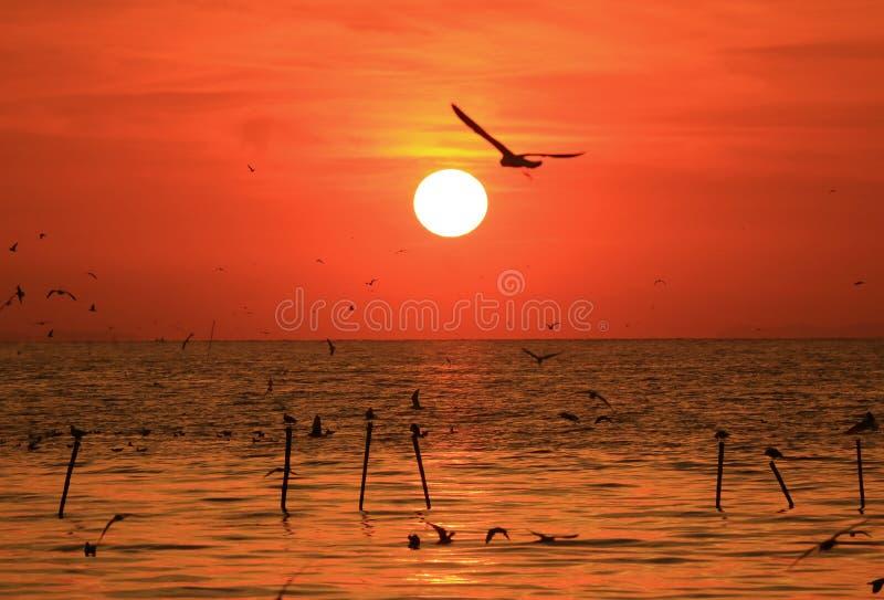 Silhueta da gaivota do voo contra o céu vívido do nascer do sol da cor, o Golfo da Tailândia fotos de stock royalty free