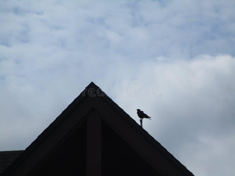 Silhueta da gaivota que atrasa-se em um telhado, Canadá, 2018 fotos de stock