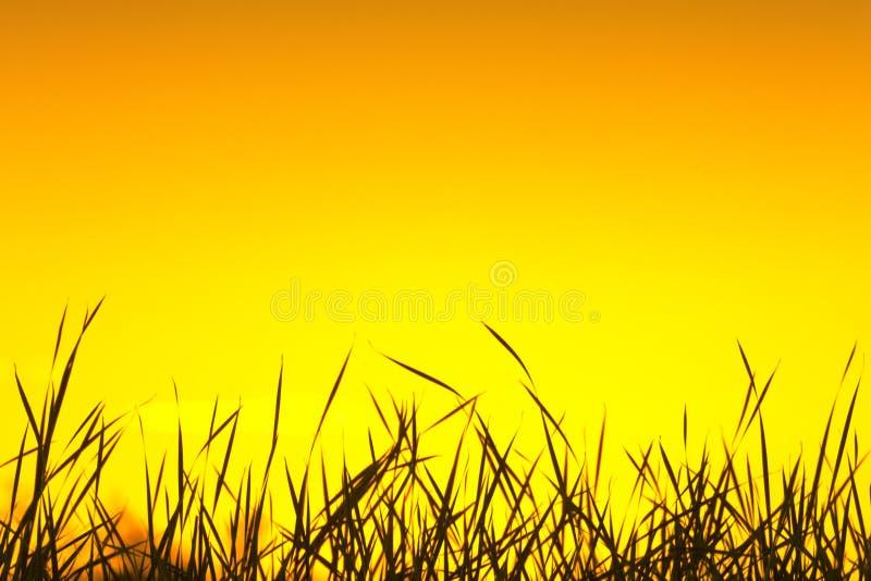 Silhueta da grama selvagem imagens de stock royalty free
