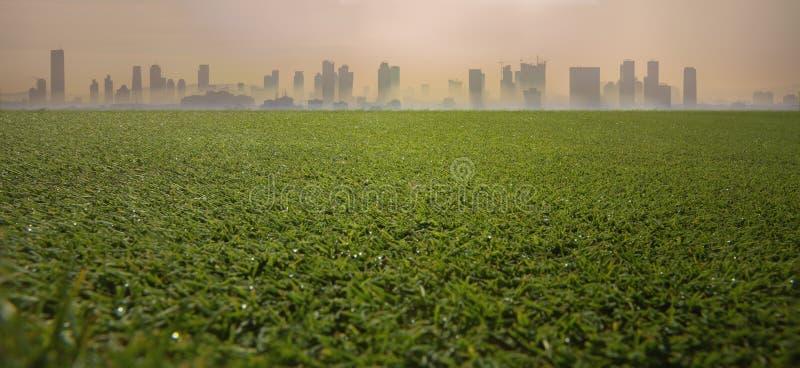 Silhueta da grama verde e da cidade fotografia de stock