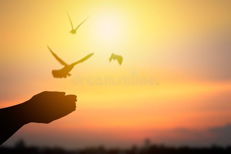 Silhueta da mão que libera pássaros e que voa à vida da liberdade, c foto de stock