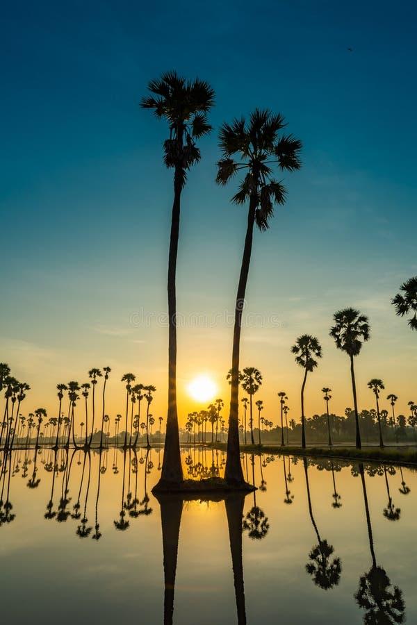 Silhueta da palma de palmyra gêmea e das suas reflexões imagem de stock
