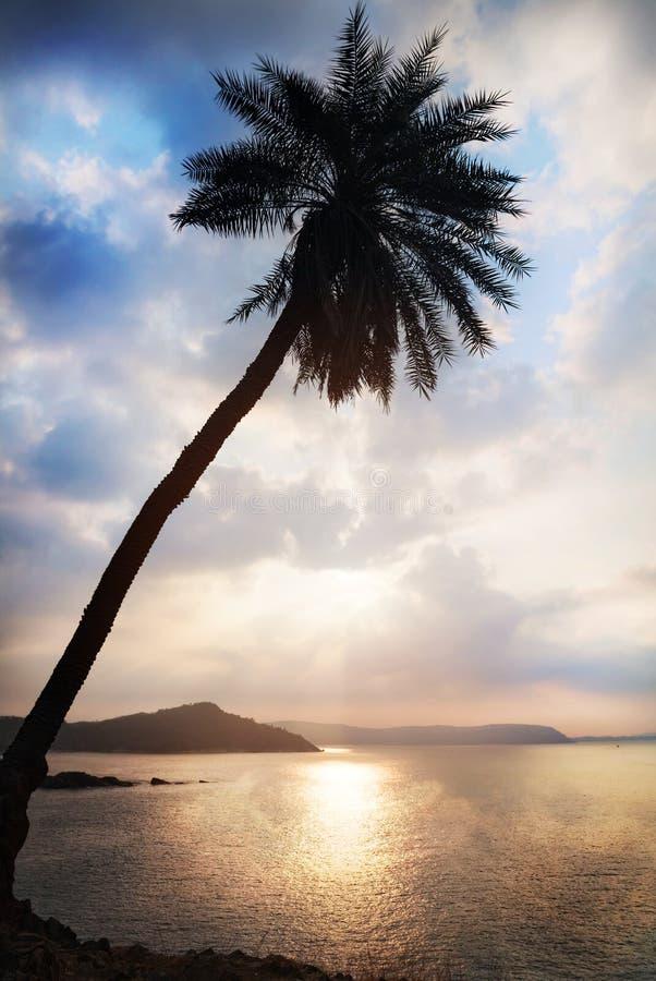 Silhueta da palmeira imagem de stock