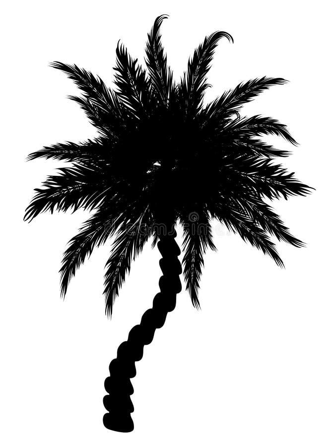 Silhueta da palmeira ilustração do vetor