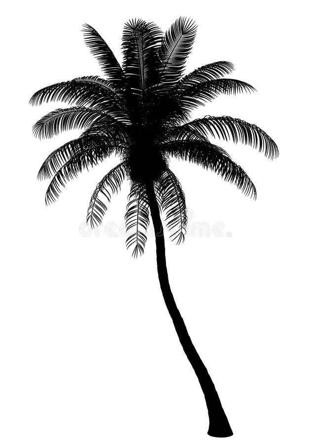 Silhueta da palmeira do coco isolada no branco