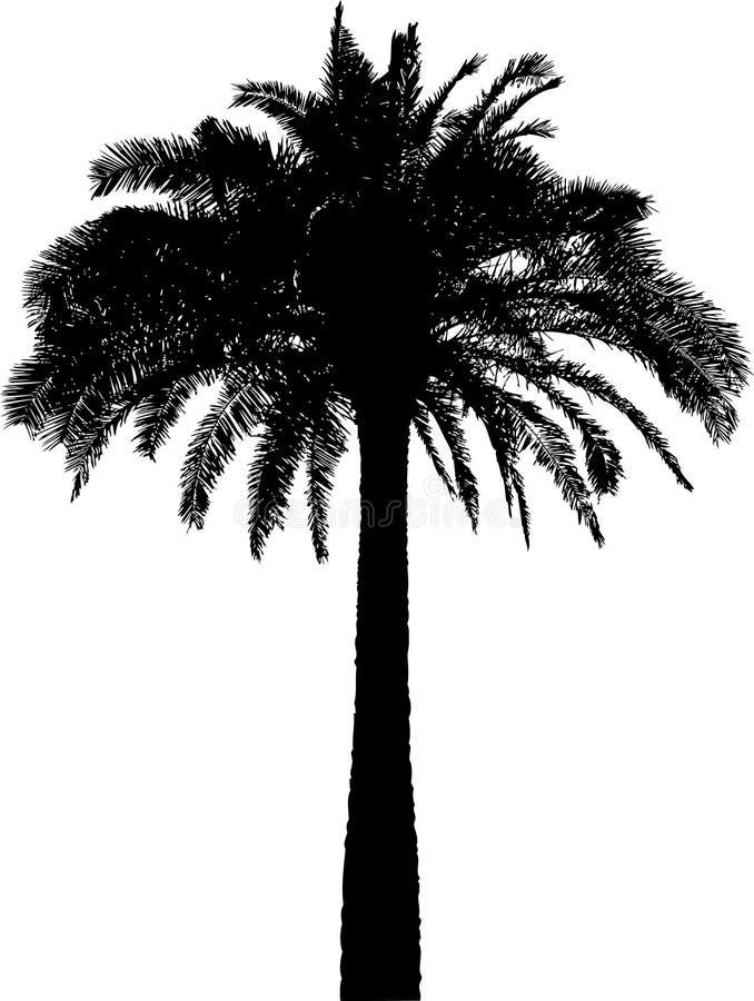 Silhueta da palmeira no branco ilustração royalty free