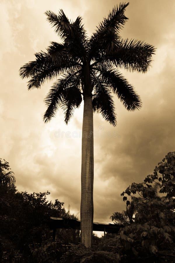 Silhueta da palmeira sob o céu nebuloso em preto e branco. fotos de stock royalty free