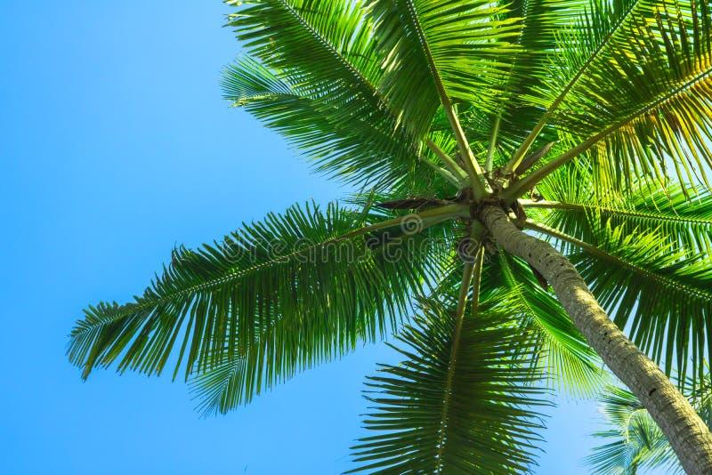 Silhueta da palmeira tropical imagens de stock royalty free