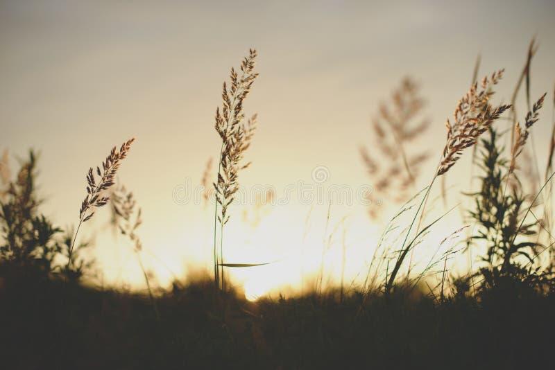 Silhueta da planta do nascer do sol na frente do sol imagens de stock royalty free