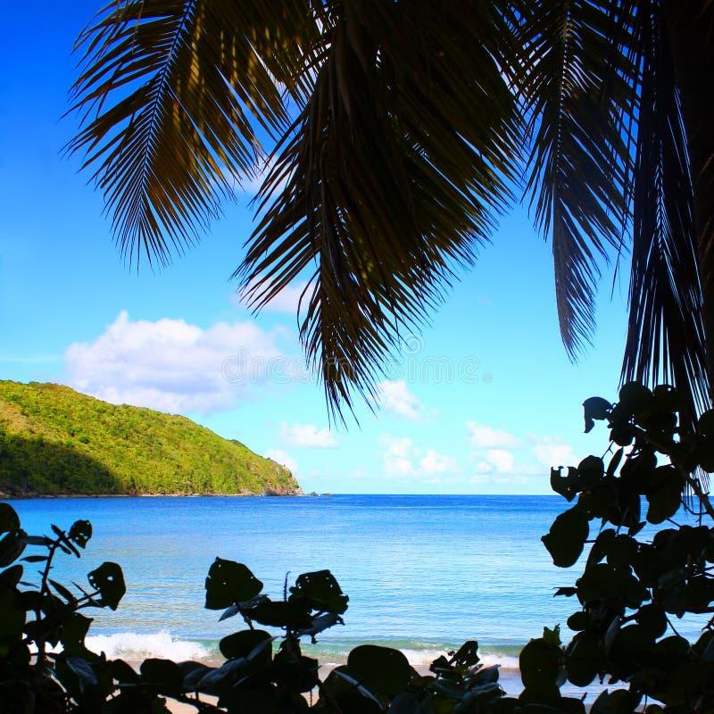 Silhueta da praia de Ilhas Virgens britânicas fotos de stock