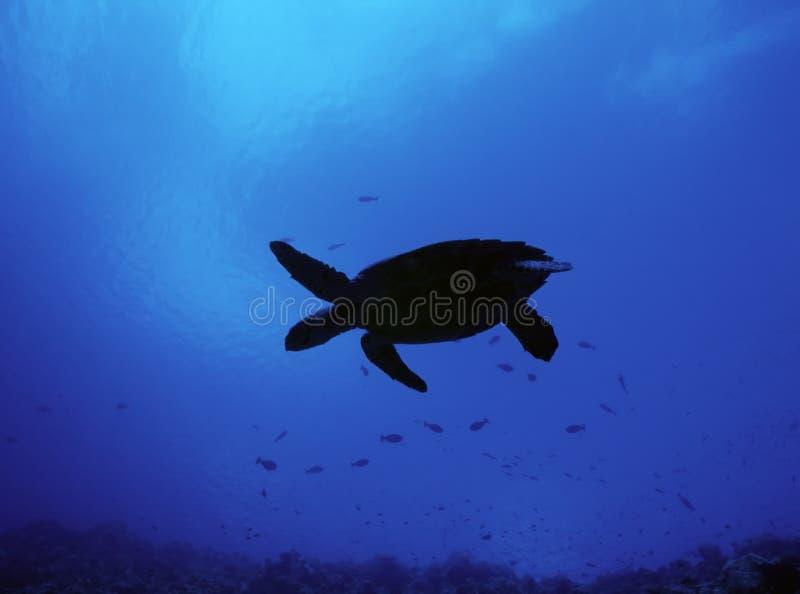 Silhueta da tartaruga fotografia de stock