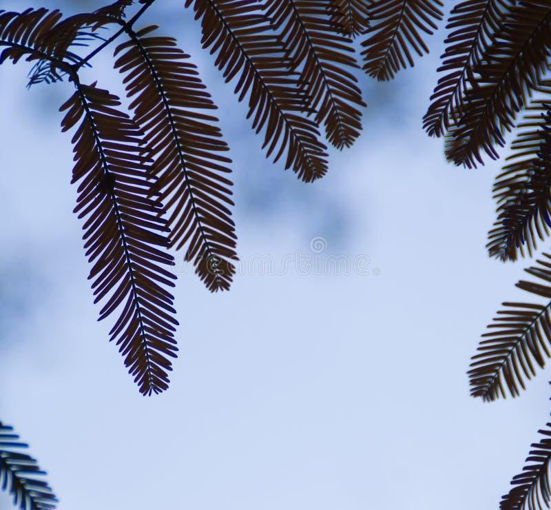 Silhueta das folhas contra o céu imagem de stock