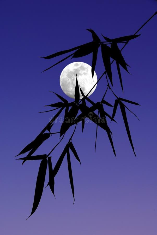 Silhueta das folhas de bambu imagem de stock