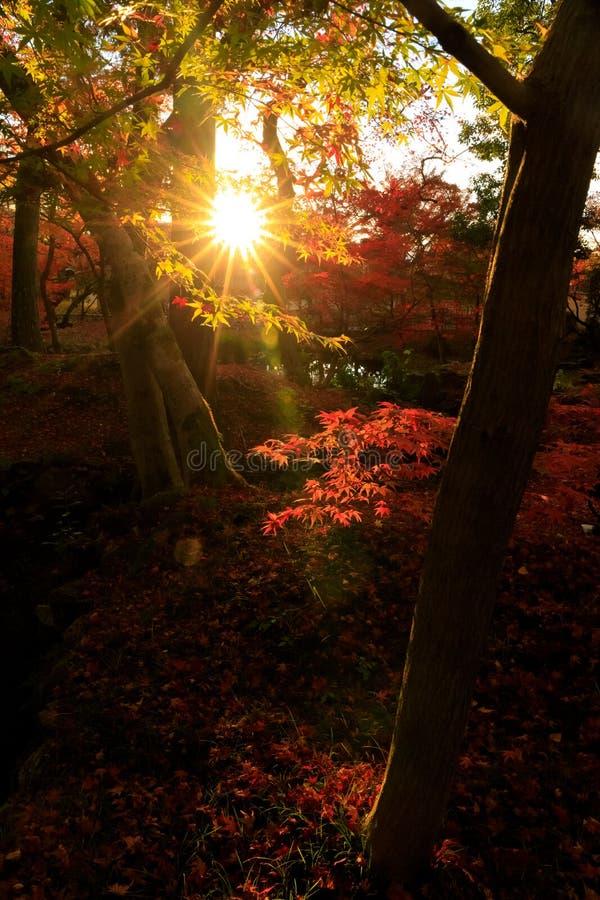 Silhueta das folhas de outono do bordo vermelho com alargamento da lente fotos de stock royalty free