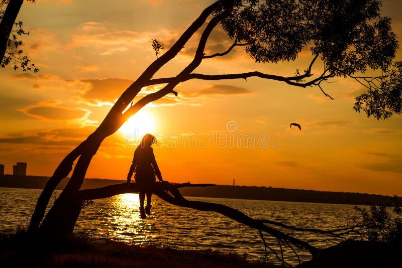 Silhueta das jovens mulheres que sentam-se na árvore no por do sol fotografia de stock