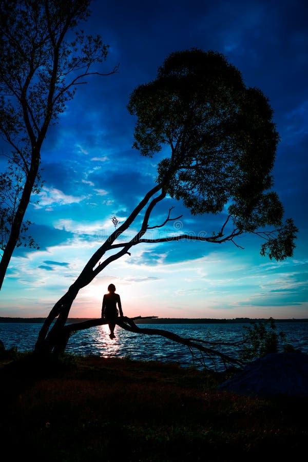 Silhueta das jovens mulheres que sentam-se na árvore no por do sol foto de stock