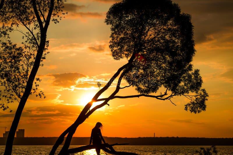 Silhueta das jovens mulheres que sentam-se na árvore no por do sol fotos de stock royalty free