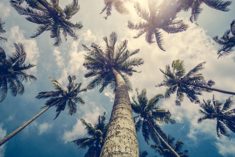 Silhueta das palmas no kood do koh da ilha do tropica em Tailândia imagem de stock
