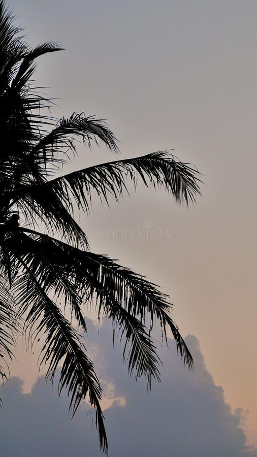 Silhueta das palmeiras do coco isoladas no fundo colorido do céu fotos de stock