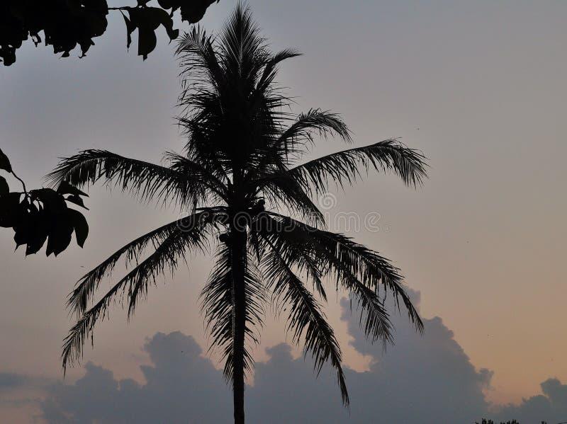 Silhueta das palmeiras do coco isoladas no fundo colorido do céu fotos de stock royalty free