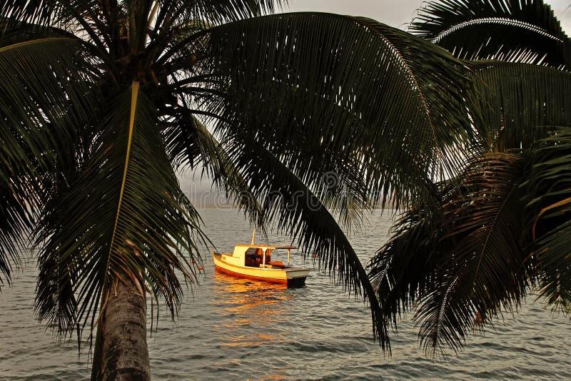 Silhueta das palmeiras e de um barco no por do sol, porto de Savusavu, fotografia de stock royalty free