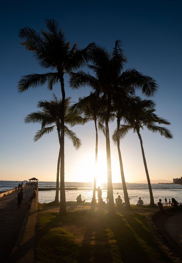 Silhueta das palmeiras na praia de Waikiki, Hava fotos de stock