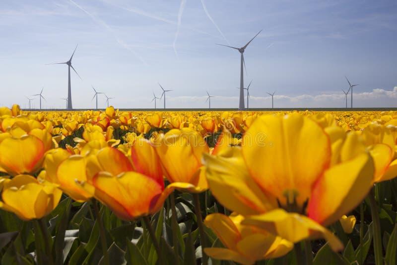 Silhueta das turbinas eólicas contra o céu azul com tulipas alaranjadas imagem de stock royalty free