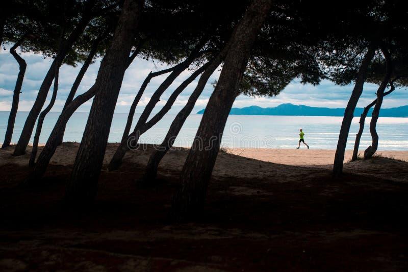 Silhueta de corredor correndo na praia Silhueta de árvores em frente à foto Editar espaço foto de stock
