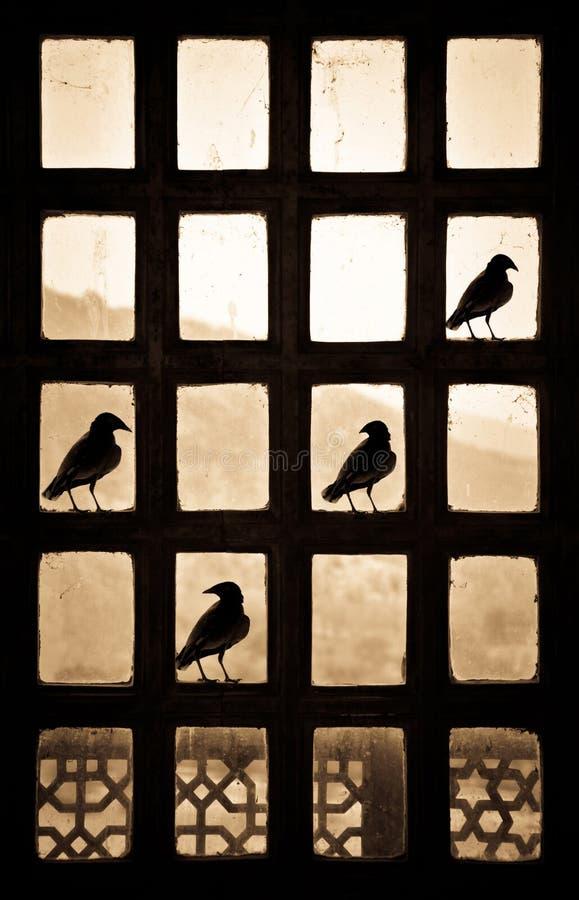 Silhueta de quatro pássaros que fazem um sinal do tiquetaque em uma janela patternlike na Índia foto de stock royalty free