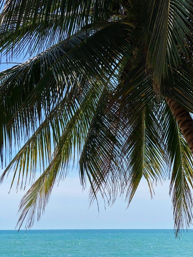 Silhueta de ramos da palma contra o céu azul e o mar fotografia de stock royalty free