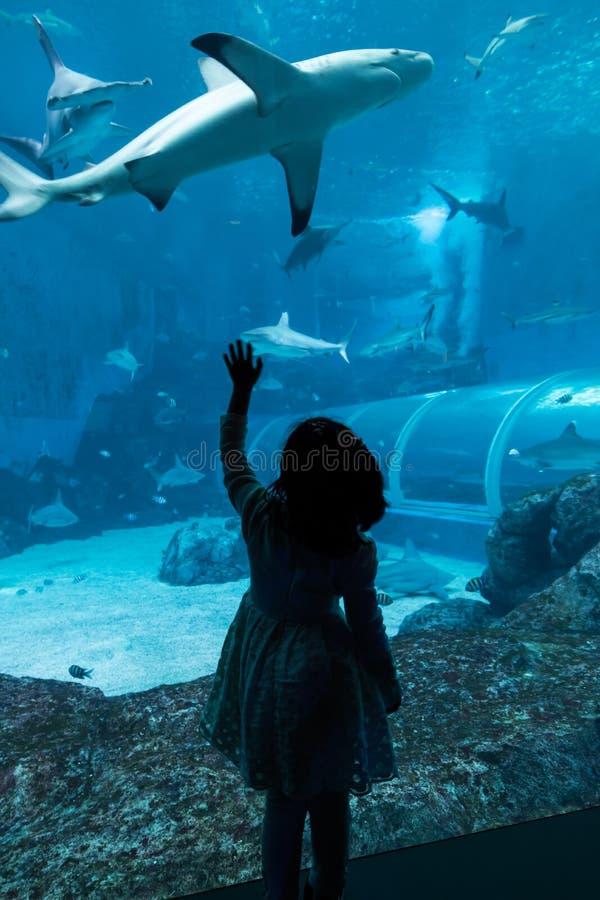 A silhueta de tubarões de observação de uma moça nada perto no S e A Aquário, Singapura fotos de stock