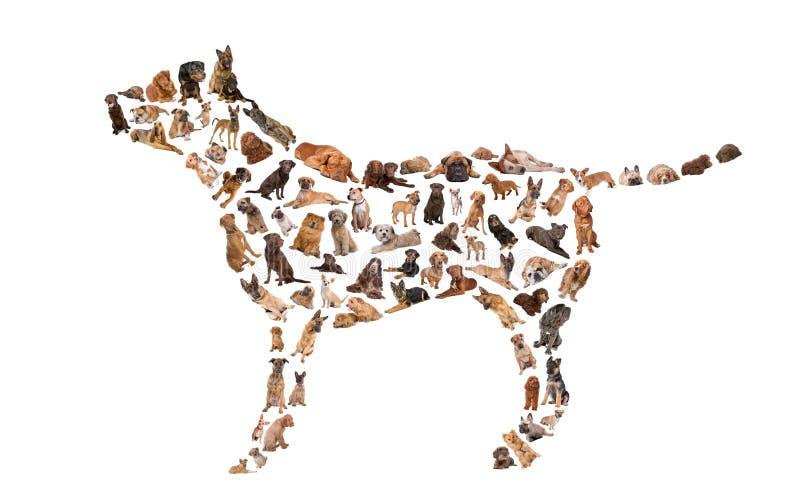 Silhueta de um cão fotos de stock royalty free