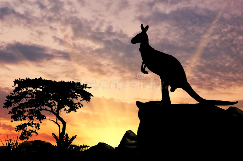 Silhueta de um canguru imagens de stock royalty free