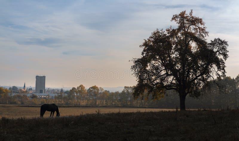 Silhueta de um cavalo e de uma árvore do outono foto de stock royalty free